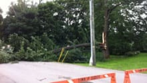 The storm battered trees, causing road closures in Sussex and other places.