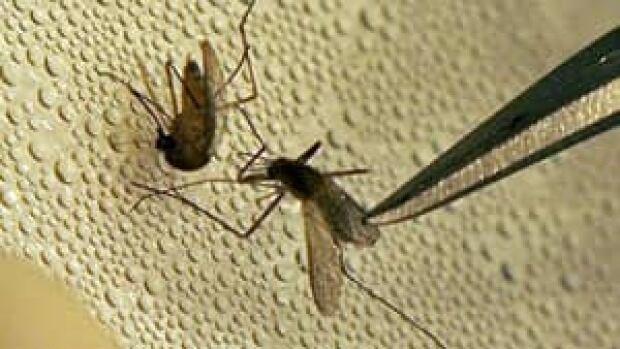 mi-300-mosquito-cp2938985
