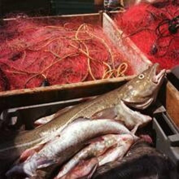 sm-220-cod-fish-cp-1322394