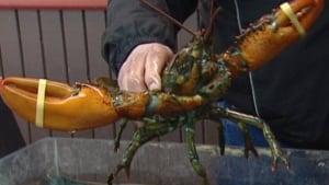 hi-lobster-stjohns503-
