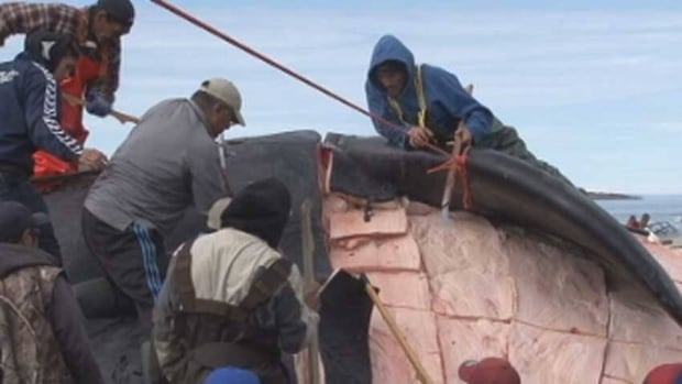 Iqaluit hunters cut up a bowhead whale in 2011. A new study of Nunavut's food security problems is calling for increased support for the territory's hunters and fishers.