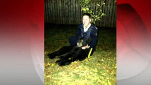A small black bear was shot by an RCMP officer in a Dieppe backyard Wednesday evening. The homeowner took the picture.