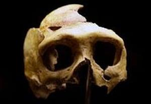 sm-220-neanderthal-skull-rtr2b3e6