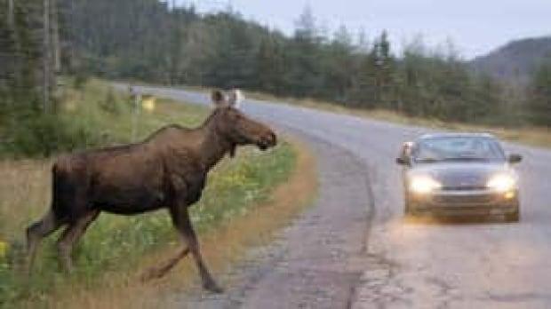 moose-cp-9990500-306