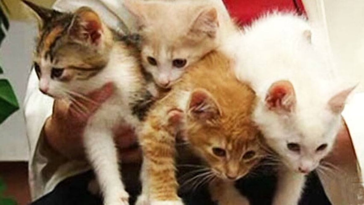 Humane Society Holds Pet Adoption Blitz Windsor Cbc News