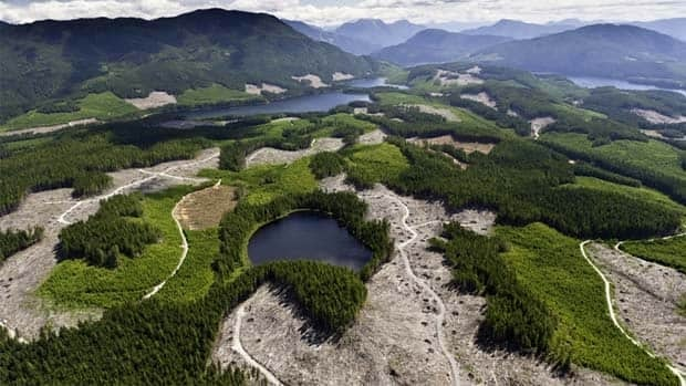 TimberWest Forest Corp. denies environmentalists' claims that its clearcuts are endangering old-growth forest. Garth Lenz and Lighthawk