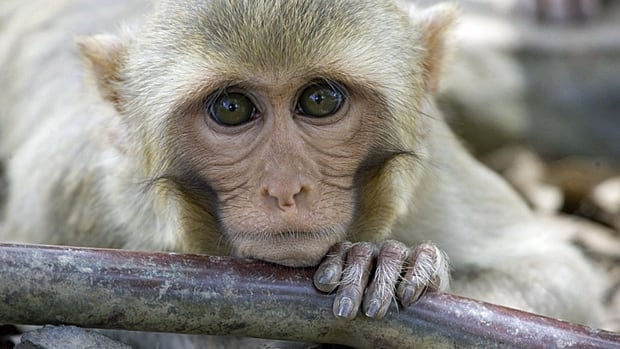 Last weekend, the New York Times reported that Volkswagen funded an experiment in which crab-eating macaque monkeys were exposed to diesel emissions.