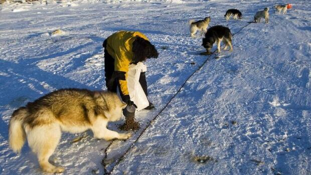 Fernando Caspaneda-Pucci feeds sled dogs on Frobisher Bay in 2009. The City of Iqaluit is holding a public meeting tonight to get input on its proposed Responsible Pet Owner and Sled Dog bylaw, combining the sled dog bylaw and the animal control bylaw.