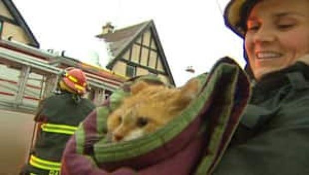 mi-cat-blanket