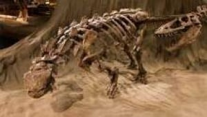 si-dinosaur-find-ankylosaur-220