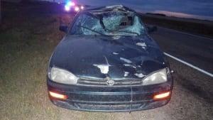 Moose collision near Davin