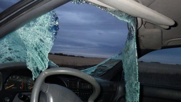 Windshield smashed in moose collision