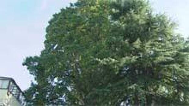 mi-bc-111014-legg-mansion-tree