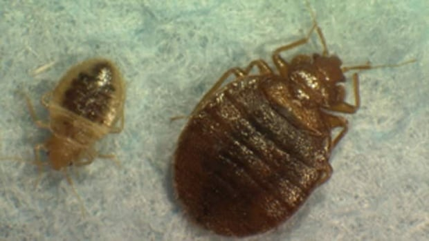Local bed bug and environmental experts say DDT would do little to curb the infestation.