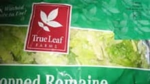 si-cgy-lettuce-recall