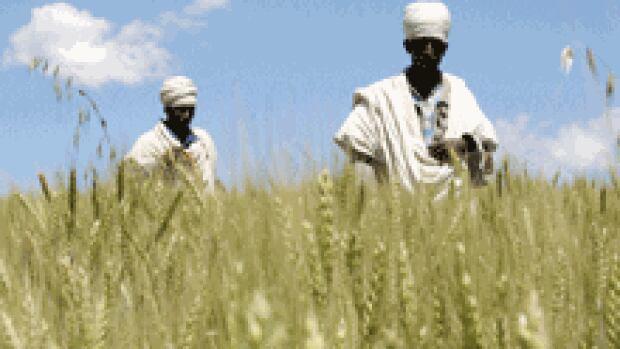 si-farming-ethiopia-220-rtx