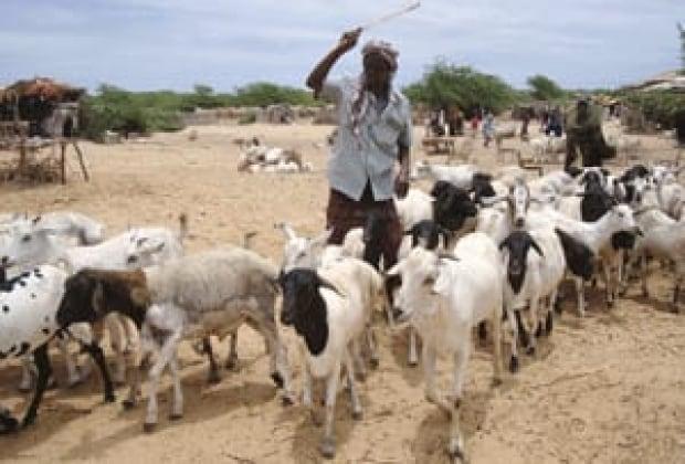 si-somali-herdsman-300-rtr2