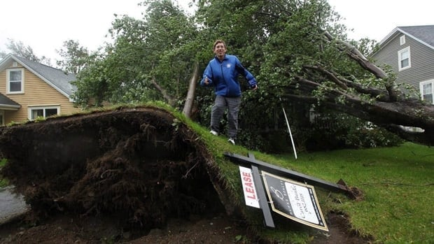 High winds from Hurricane Igor toppled trees in St. John's on Sept. 21, 2010.