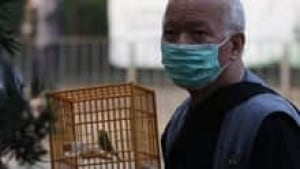 in-220-bird-flu-cp-9773818