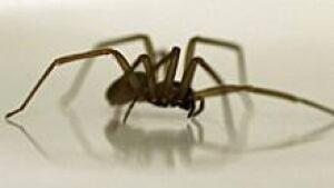 ii-spider-220-00496607