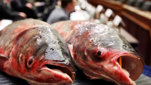Scientists hasve had success using electrical barriers to keep out the invasive Asian carp species.