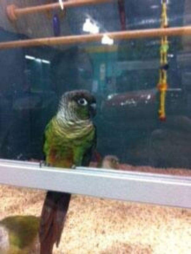 si-bird