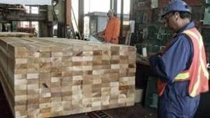 tp-lumber-bc-cp-4458999