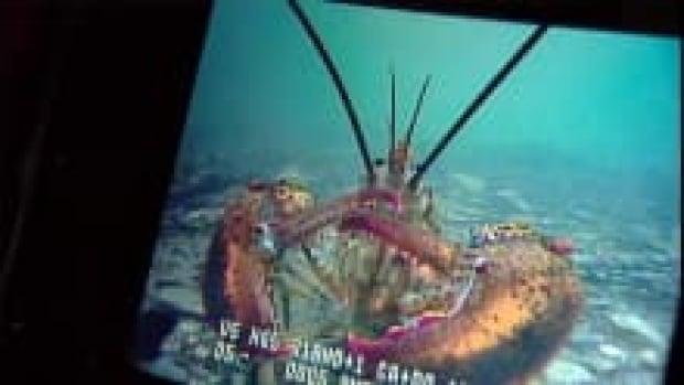 lobster_220x124_1