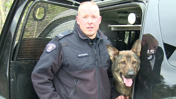 Crash and his handler Cpl. Cam Long, are Yukon's police dog service for tracking suspects and searching for missing persons. On Friday, they located a missing 78-year-old man lying in two feet of snow in a field in Whitehorse.