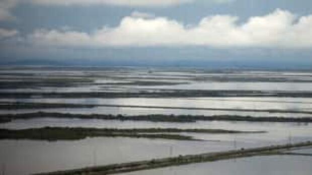 tp-flood-farm-cp-9968396