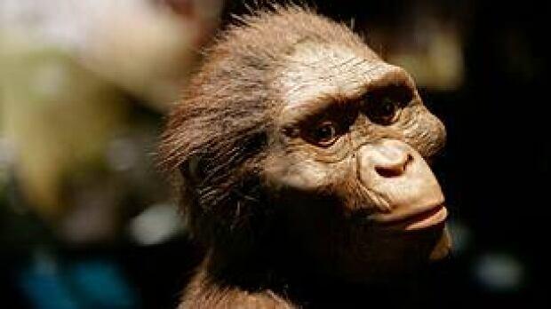 tp-lucy-australopithecus-model-ap-3487335