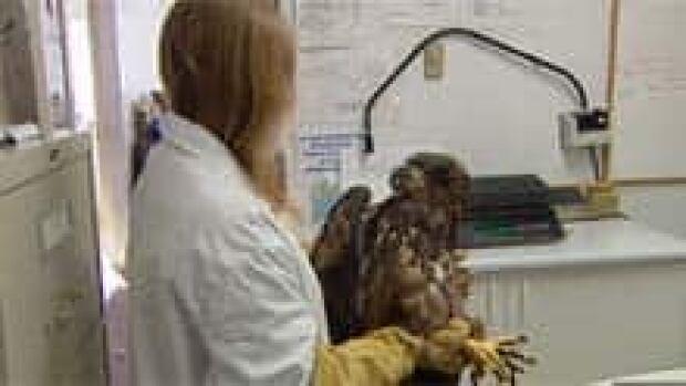 bc-110224-eagle-rehab-220