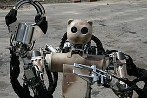 mi-rcw-bear-11-300-cbc