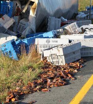 si-nb-lobster-road-300
