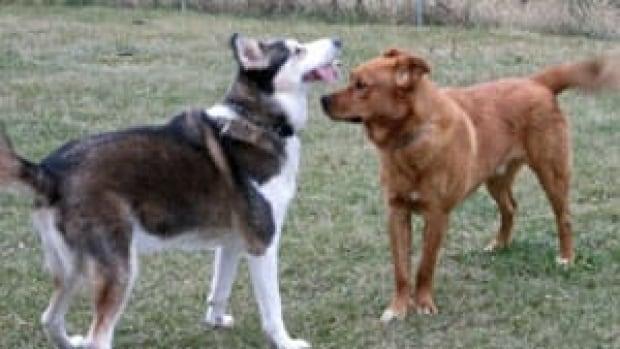 mi-dogs-playing-300