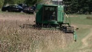 pe-mi-grain-harvest