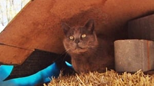 li-wdr-feral-cat