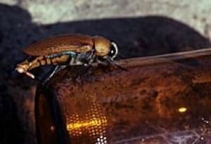 sm-220-beetle-beer-bottle