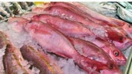 hi-852-fish-mercury-cp-3335-3col