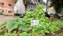 pe-hi-urban-garden