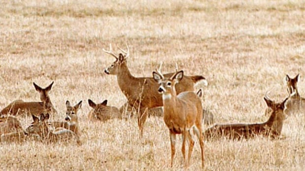 The Department of Natural Resources says it is looking into options for research and potentially allowing hunters to kill more deer within the hunting season.