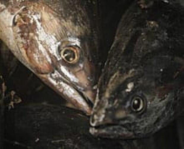 ip-japanfish-rtr2kjfi