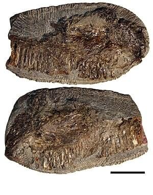 pterosaur-jaws-300px