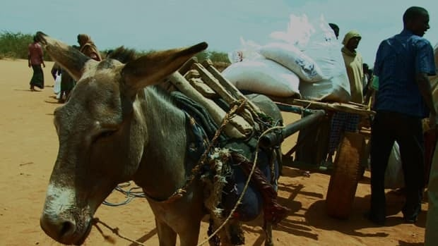 The cost of transporting supplies from the distribution point back to a shelter is often out of reach for refugees in Dadaab, Kenya. The aid agency CARE is launching a program to pay donkey drivers so refugees won't have to.