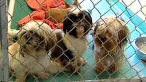 bc-100928-seized-dogs-spca
