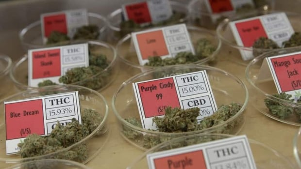 Starting April 1, only large-scale producers of medical marijuana will be authorized to produce the drug.