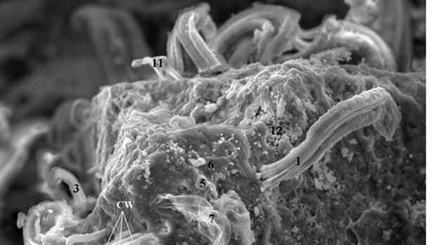li-meteorite-bacteria-620-journalofcosmology