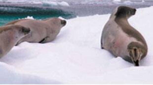 nl-seals