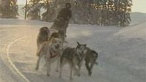 si-nwt-sled-dogs-220-file