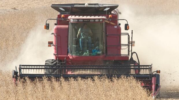 Soy beans are resistant to Roundup but now so are some weeds.(AP Photo/Nati Harnik)